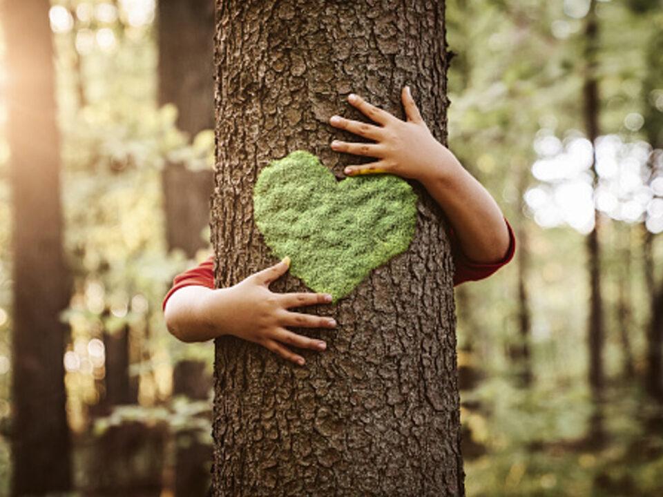 Abbracciare albero